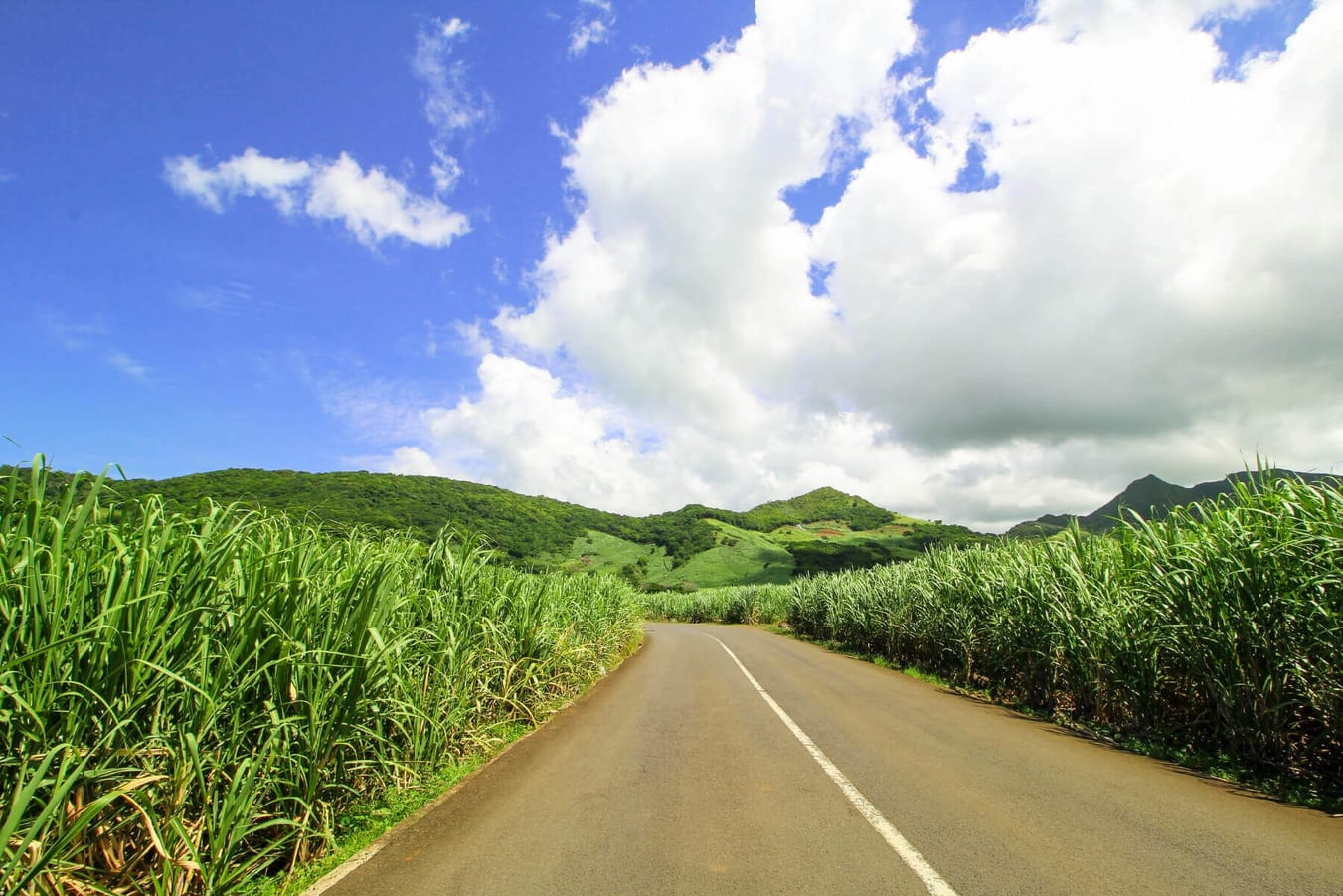 Sugar cane field - East coast
